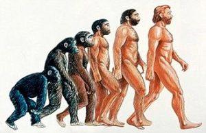 distintos tipos de hominidos