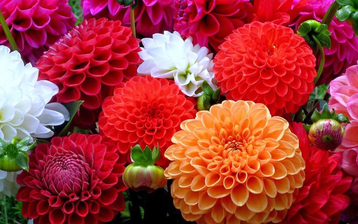 flores más comunes