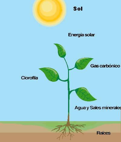 fotosíntesis en los vegetales
